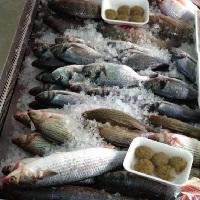 משלוח דגים אזור השרון