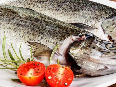 דגים טריים