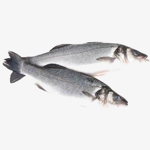 לברק דג לברק