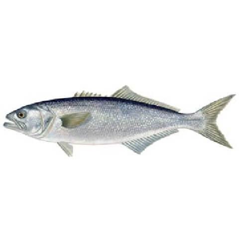גומבאר