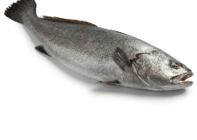 מוסאר ים