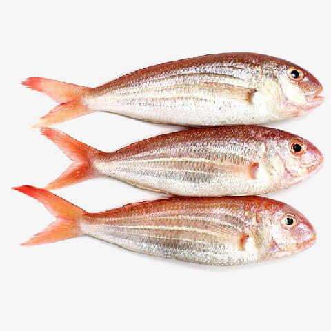 דג ברבידה